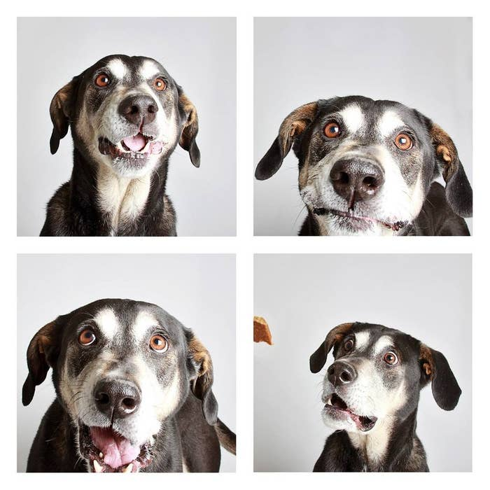 """Photographer Guinnevere Shuster took several pups that she felt """"needed a little extra help getting adopted or that don't do well in a shelter setting"""" into a photobooth experience. Here the dogs were played with, treated, and just overall spoiled (as they should be) in order to help them relax and let their real personalities shine."""