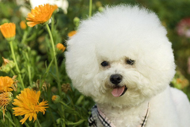 18 Fluffy Dogs You Ll Want To Roll Around In