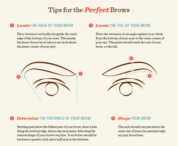 16 eyebrow diagrams that will explain everything to you the head is the part of your brow thatx27s closest to your ccuart Gallery