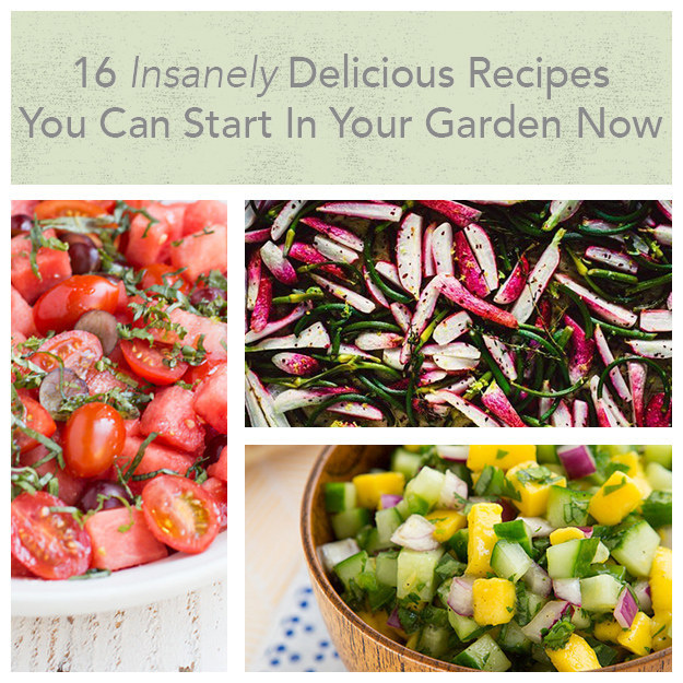 16 Insanely Healthy Recipes That Are Delicious: 16 Insanely Delicious Recipes You Can Start In Your Garden Now