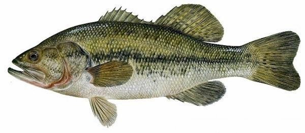 The Freshwater Fish Quiz