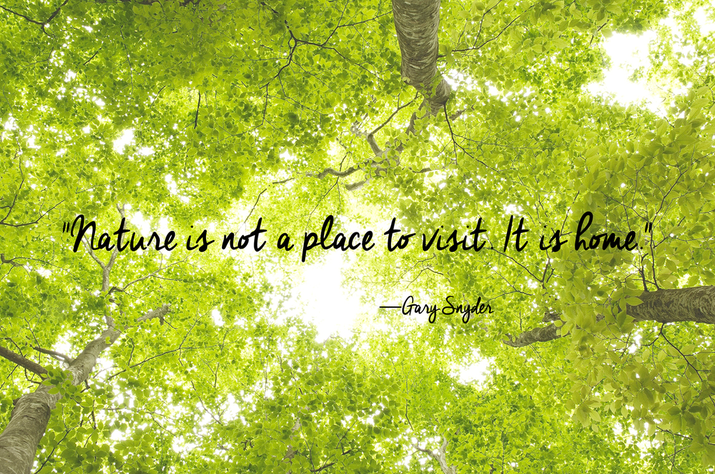 Quotes Nature Cool 24 Of The Most Beautiful Quotes About Nature