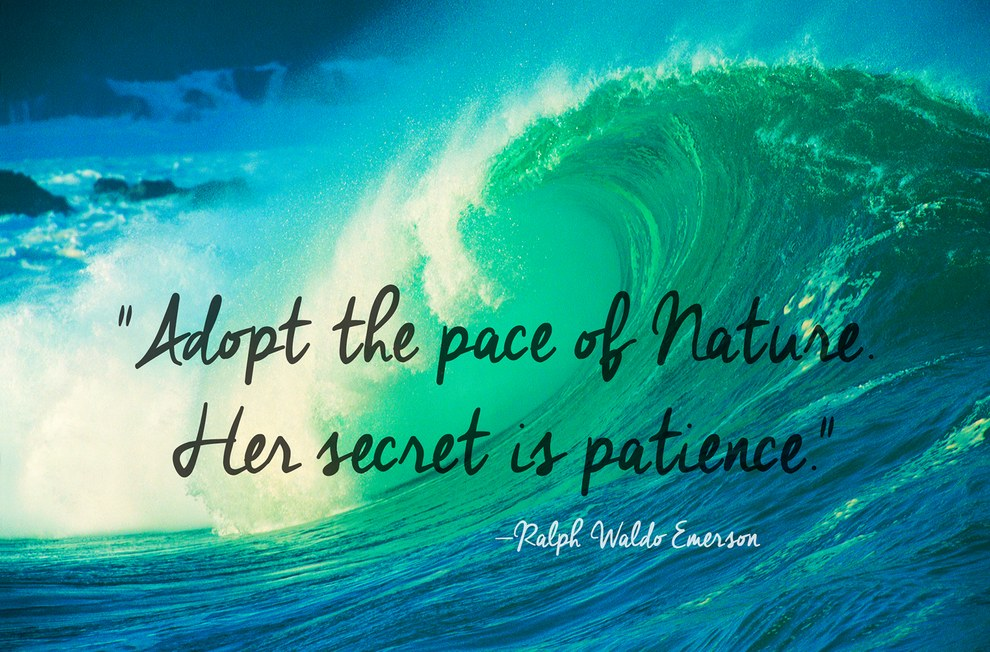 The Most Beautiful Quotes About Nature I Love Nature