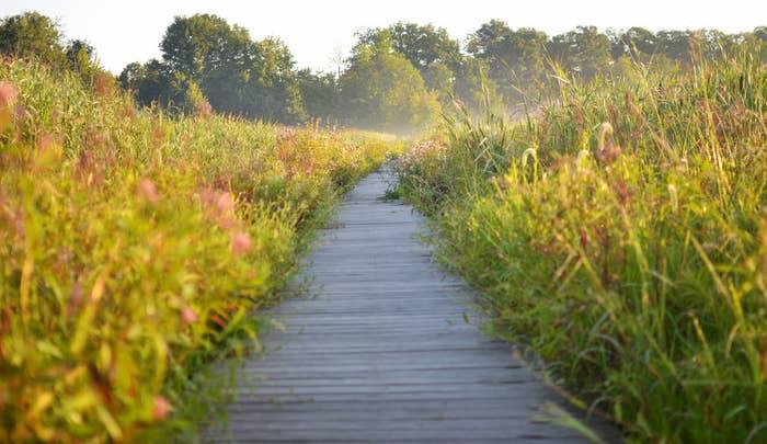Mentor Marsh State Nature Preserve