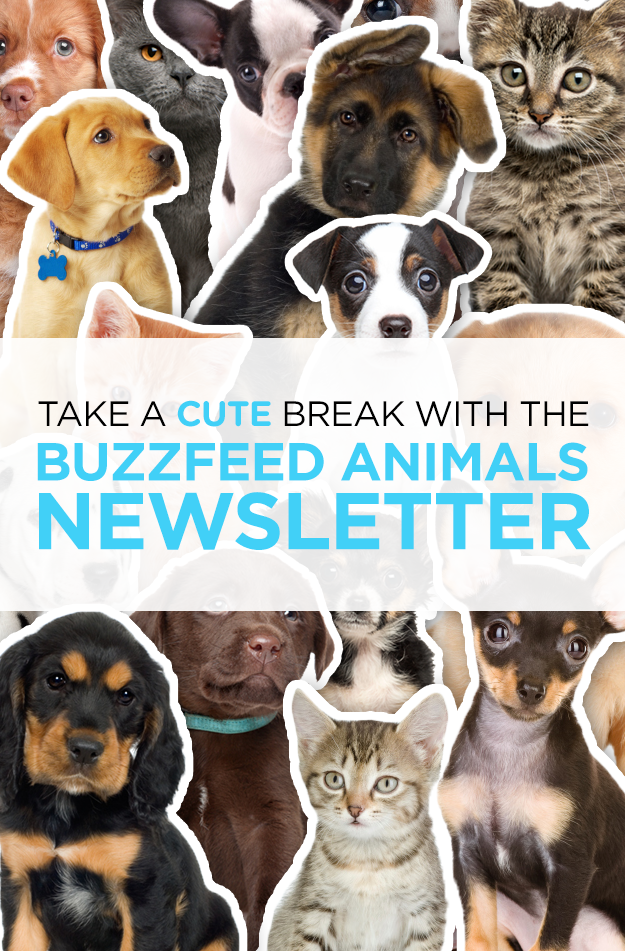 Take A Cute Break With The BuzzFeed Animals Newsletter!
