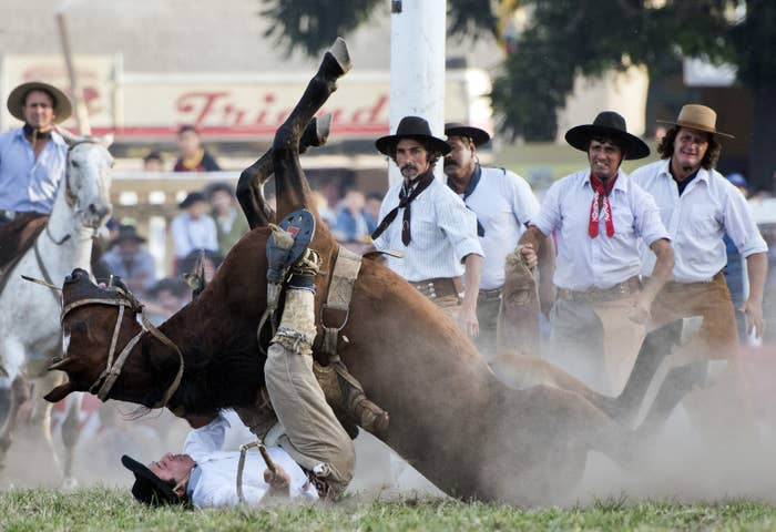 A South American cowboy known as a gaucho falls beneath a wild horse during the Criolla del Prado rodeo in Montevideo, Uruguay, on March 31, 2015. The city of Montevideo has organized the annual rodeo during Holy Week since 1925.