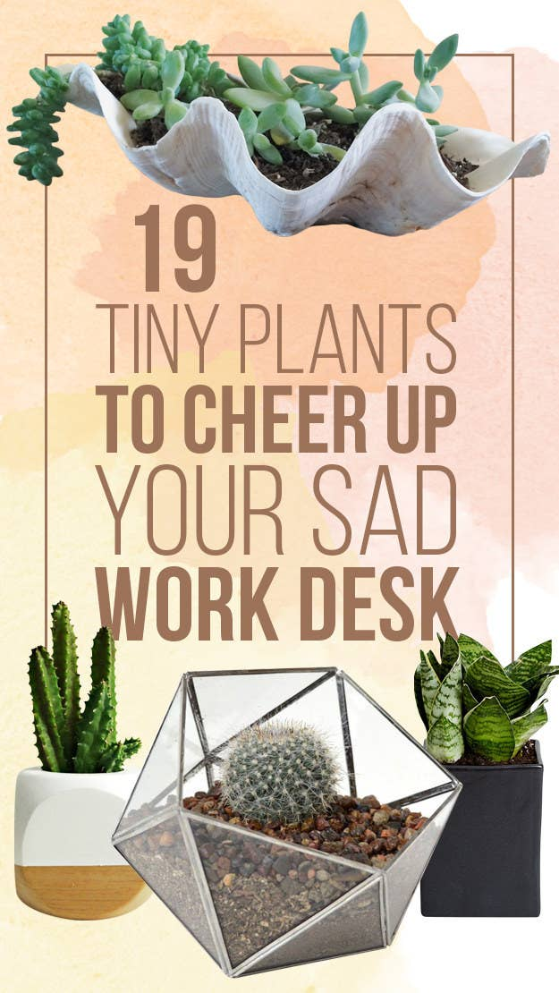 small plants for office. We Hope You Love The Products Recommend! Just So Know, BuzzFeed May Small Plants For Office
