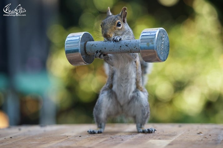 It all started when he needed a new idea to keep up his daily photo blog. He turned to the squirrels, willing subjects who visit his house four or five times a day.