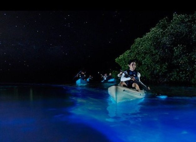 Puerto Rico ONLY has three of the six bioluminescent bays in the world.