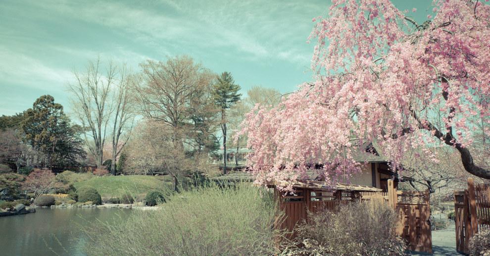 Brooklyn Botanic Garden, Brooklyn, New York, U.S.