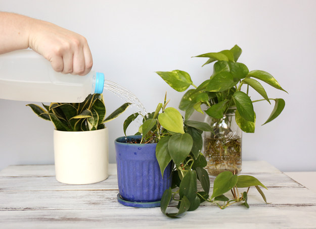 Make a portable, upcycled watering can.