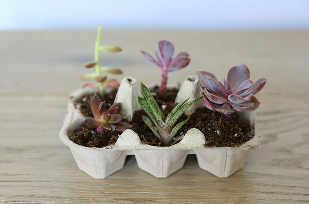 Or use a cardboard egg carton for multiple seedlings.