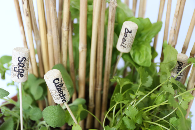 Use wine corks on bamboo skewers to label your beautiful plants.