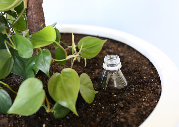 Poke holes in a plastic bottle and plant it mostly underground to create an in-soil drip waterer.
