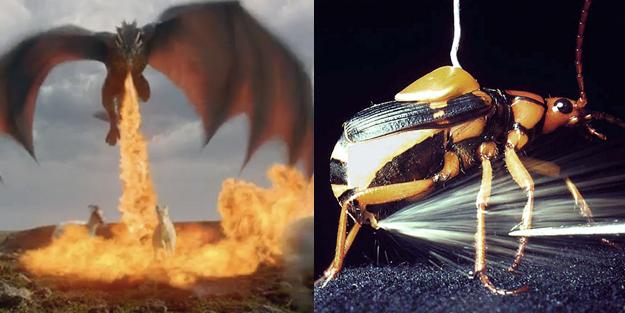 El fuego es una de las principales ventajas de ser dragón. Pueden rostizar a sus enemigos, cocinar su comida, cauterizar sus heridas y prender fogatas, todo con el poder de su aliento.¿Cómo funcionaría?El escarabajo bombardero tiene un sistema de defensa muy particular. Cuando se siente amenazado dispara una combinación de quinona y peróxido de hidrógeno, la mezcla produce una reacción exotérmica y quema a sus enemigos.Si el dragón pudiera producir chispas con sus dientes, podría encender la sustancia antes de escupirla a sus enemigos.