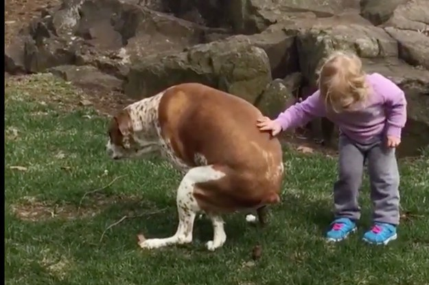 this little girl gave her dog the cutest pep talk of all time