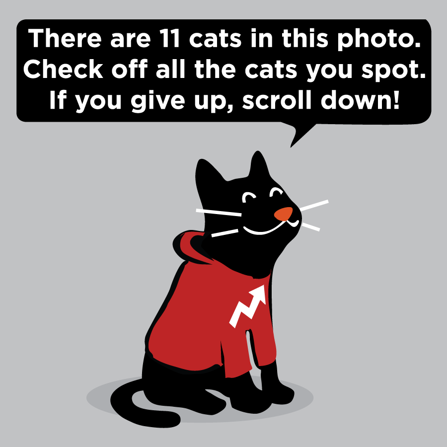 Can You Spot The 11 Cartoon Cats In This Photo?