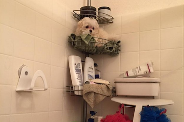 This Girl Had A Perfect Way Of Dealing With Her Dog Always Following Her Into The Shower