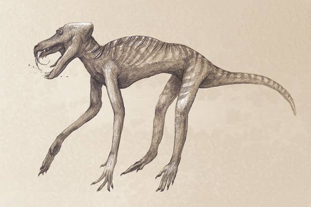 You Wont Be Able To Recognize These Modern Animals Drawn Like - 18 terrifying strange animals didnt even know existed