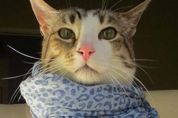 Stylish Cat 15 wardrobe tips from the most stylish cat