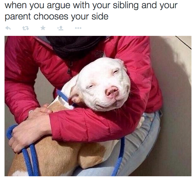 Growing up with siblings twitter dog meme