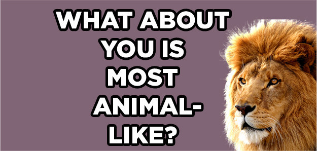 Do You Know Which Animal Matches Your Personality?