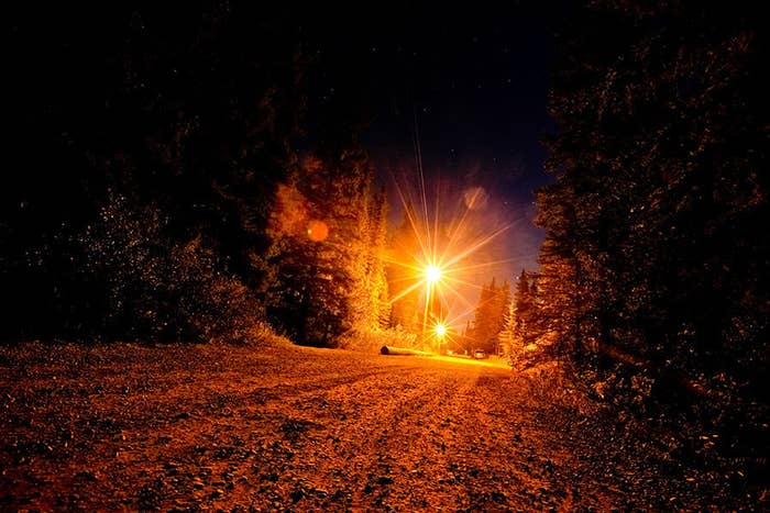 A quiet country road winds its way through the pines of Calgary.