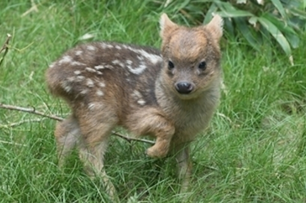 This Picture Of A Tiny Baby Deer Is The Cutest Thing You