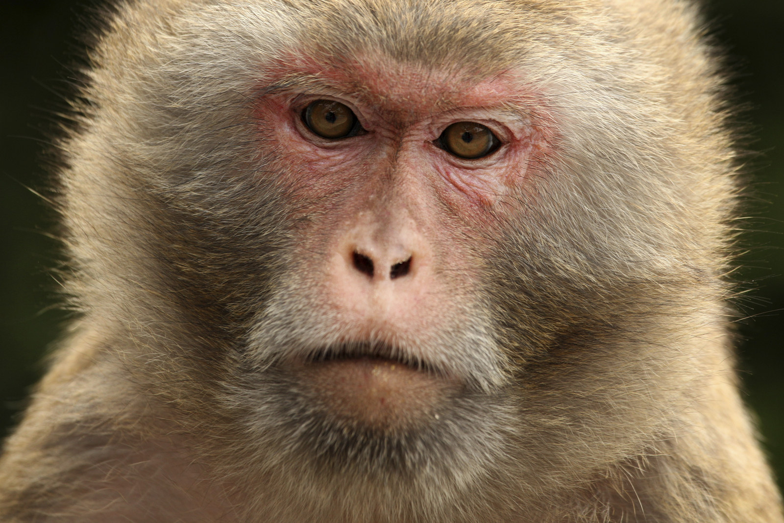The Silent Monkey Victims Of The War On Terror
