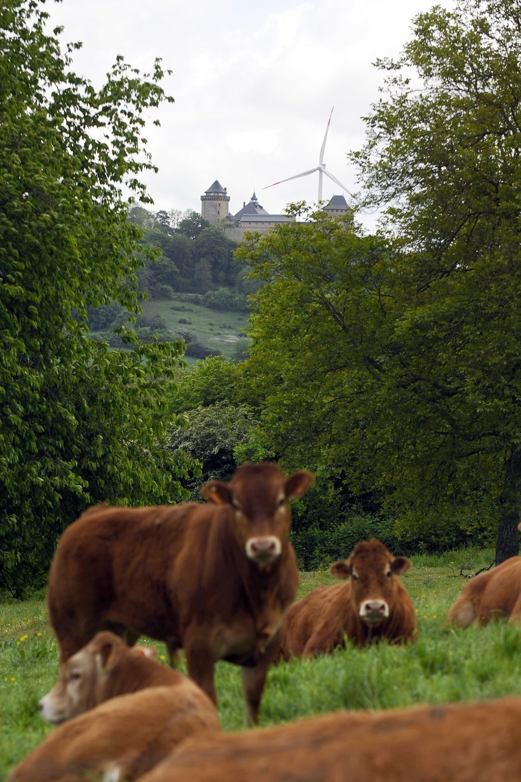 15 Things Only Cows Standing In Front Of Wind Turbines Will Understand