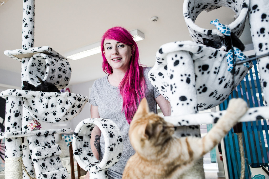There Is A Cat Café In Newcastle And It's Purr-Fect