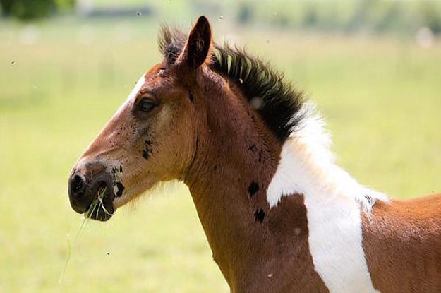 This Baby Horse Was Born With A Patch Of Hair That Looks Like His Twin