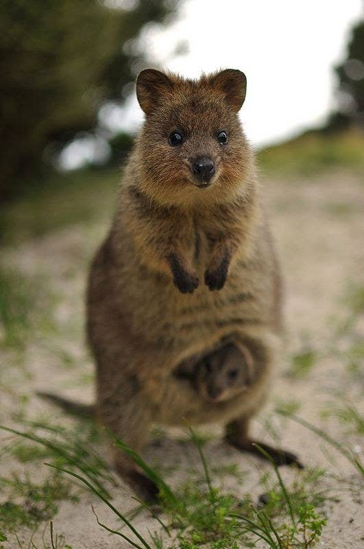Pictures That Prove Australia Has The Cutest Baby Animals In - 22 photos proving animal world better place