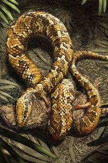 An artist's interpretation of the snake.