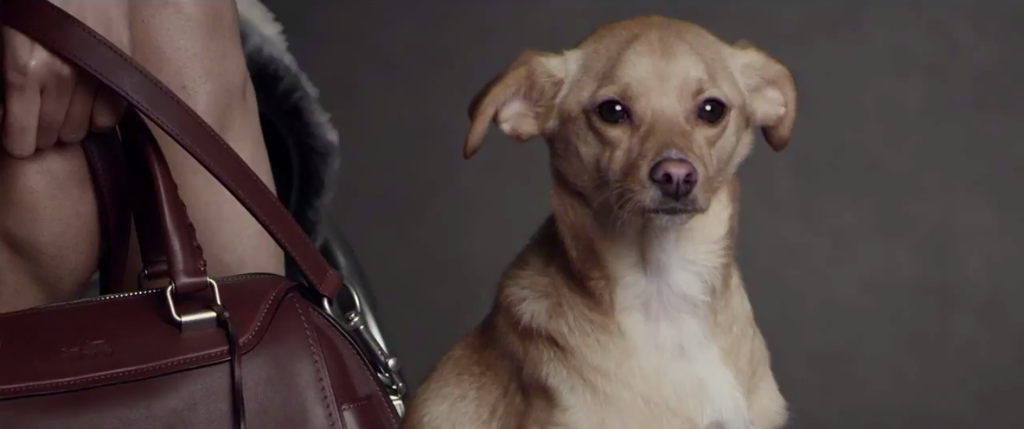 Is Ariana Grande's Dog Too Photoshopped In His Coach Ad?