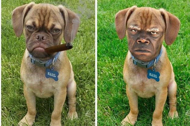 say ruff again 2 29320 1438185984 6_dblbig earl the grumpy puppy is the newest cranky internet meme
