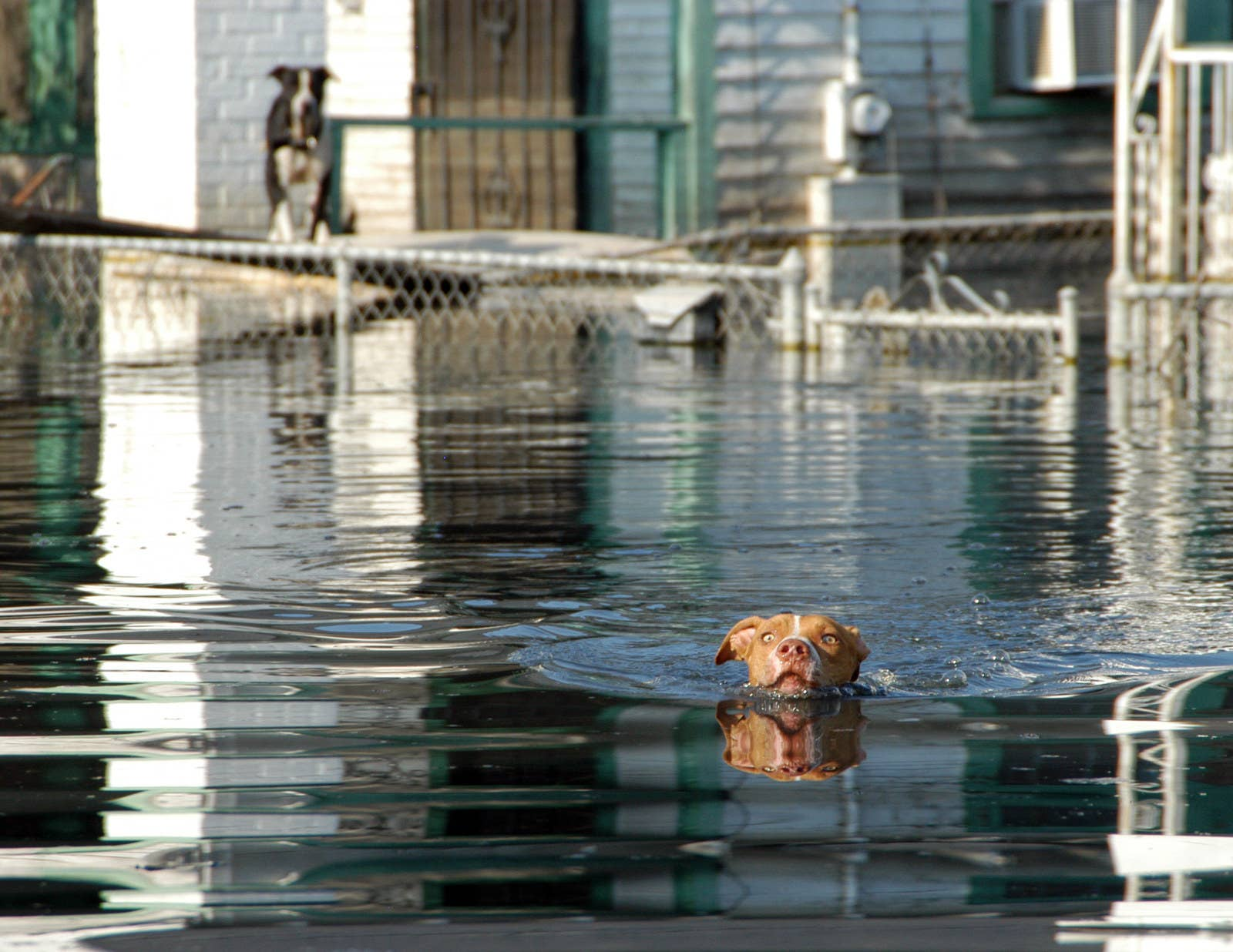 How Hurricane Katrina Turned Pets Into People - Some people tied their dogs up and left them to die during the flood