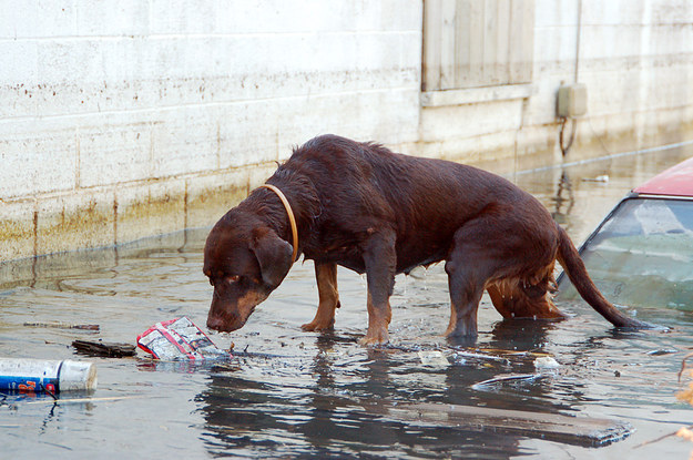 How Hurricane Katrina Turned Pets Into People