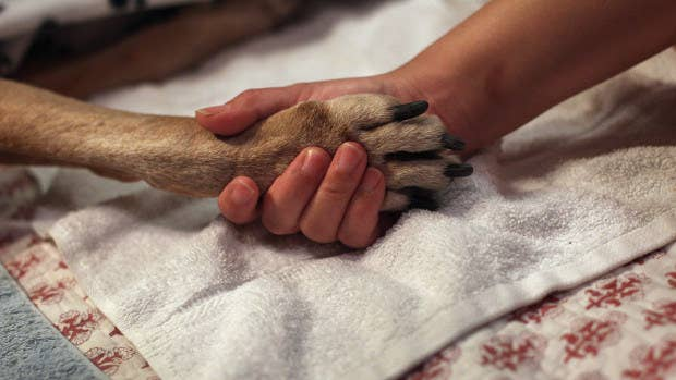 This will protect the dog's feet from salt and keep the paws from getting burned on hot pavement. After your walk, you can just rinse the paws in warm water to get rid of any salt or chemicals they might have picked up. Get more info here.