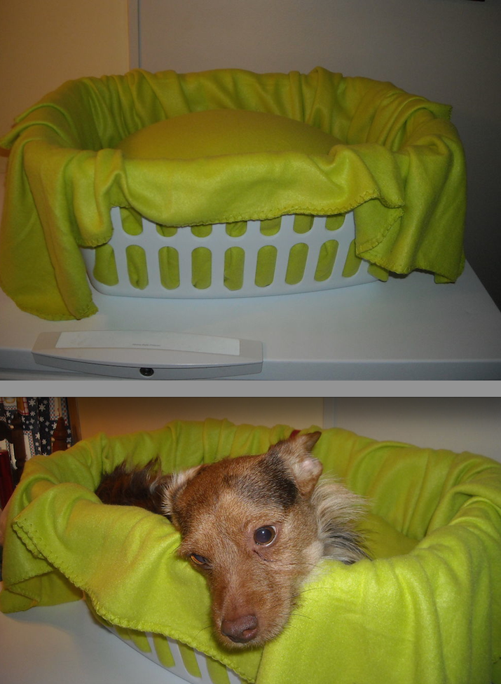 To keep your dog safe and in one spot, wrap a blanket around a pillow, place the pillow in the laundry basket, and use the excess fabric to drape around the basket to soften the edges. There's a chance you'll want to curl up in there, too.