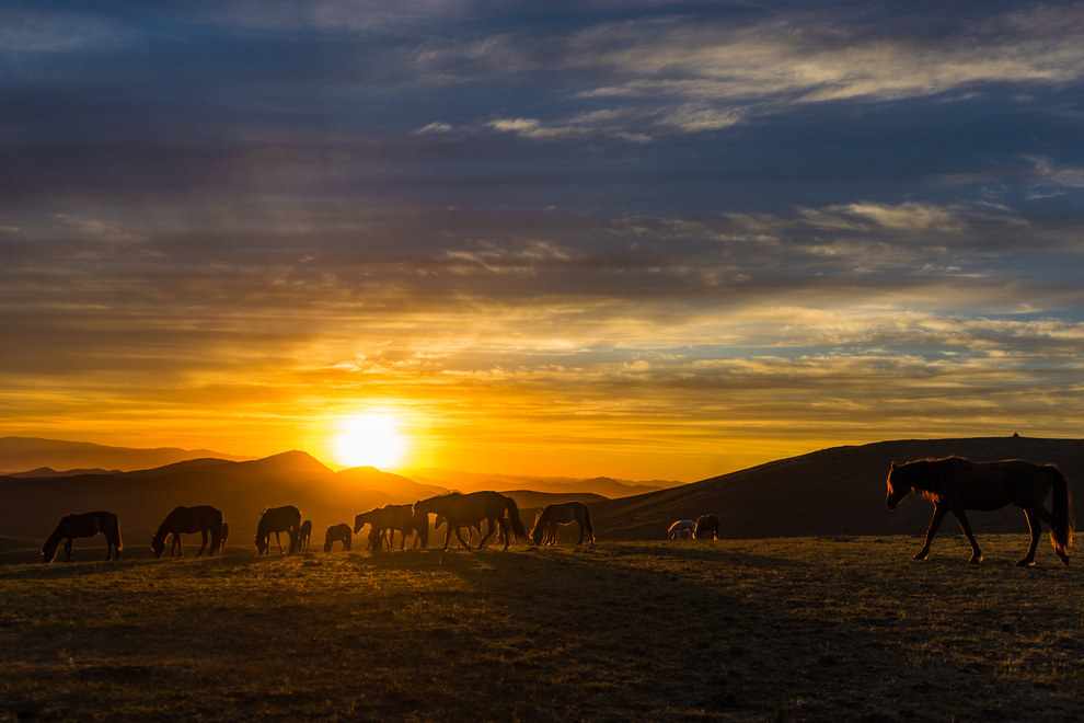 Wild horses always get in the way of your sunset shots.