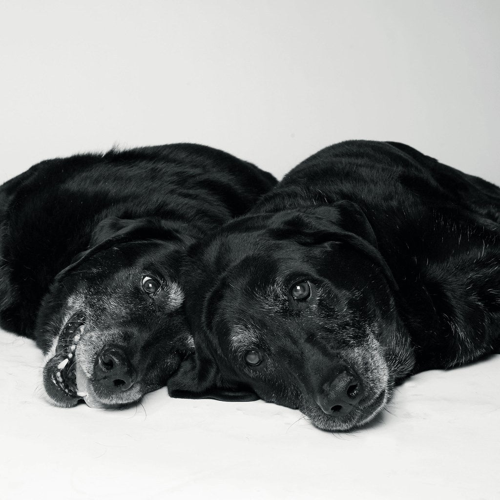 Maddie and Elle at 14 years and 13 years