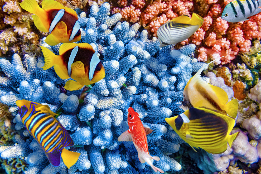 These clownfish typically only exist in screensavers.