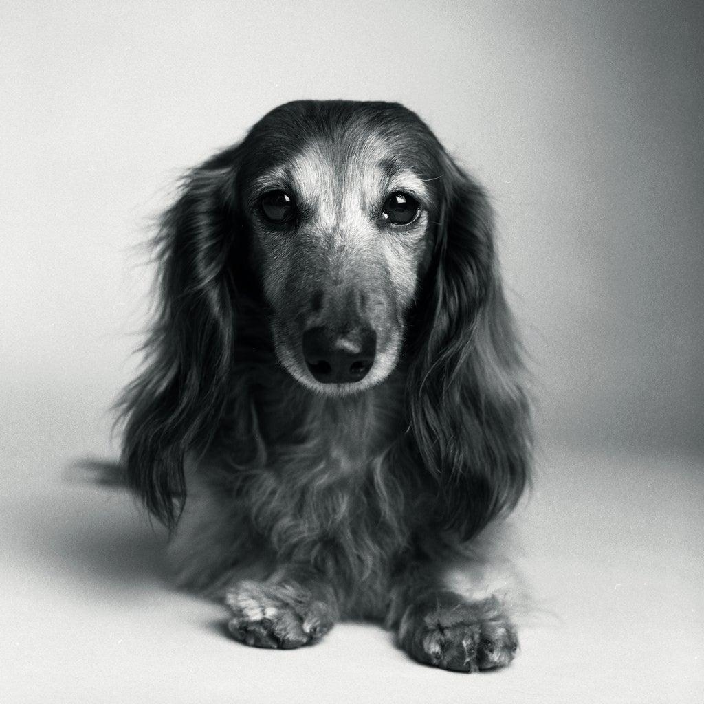 Violet at nine years
