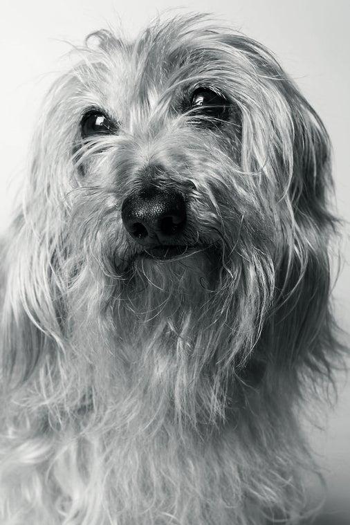 Petey at 11 years