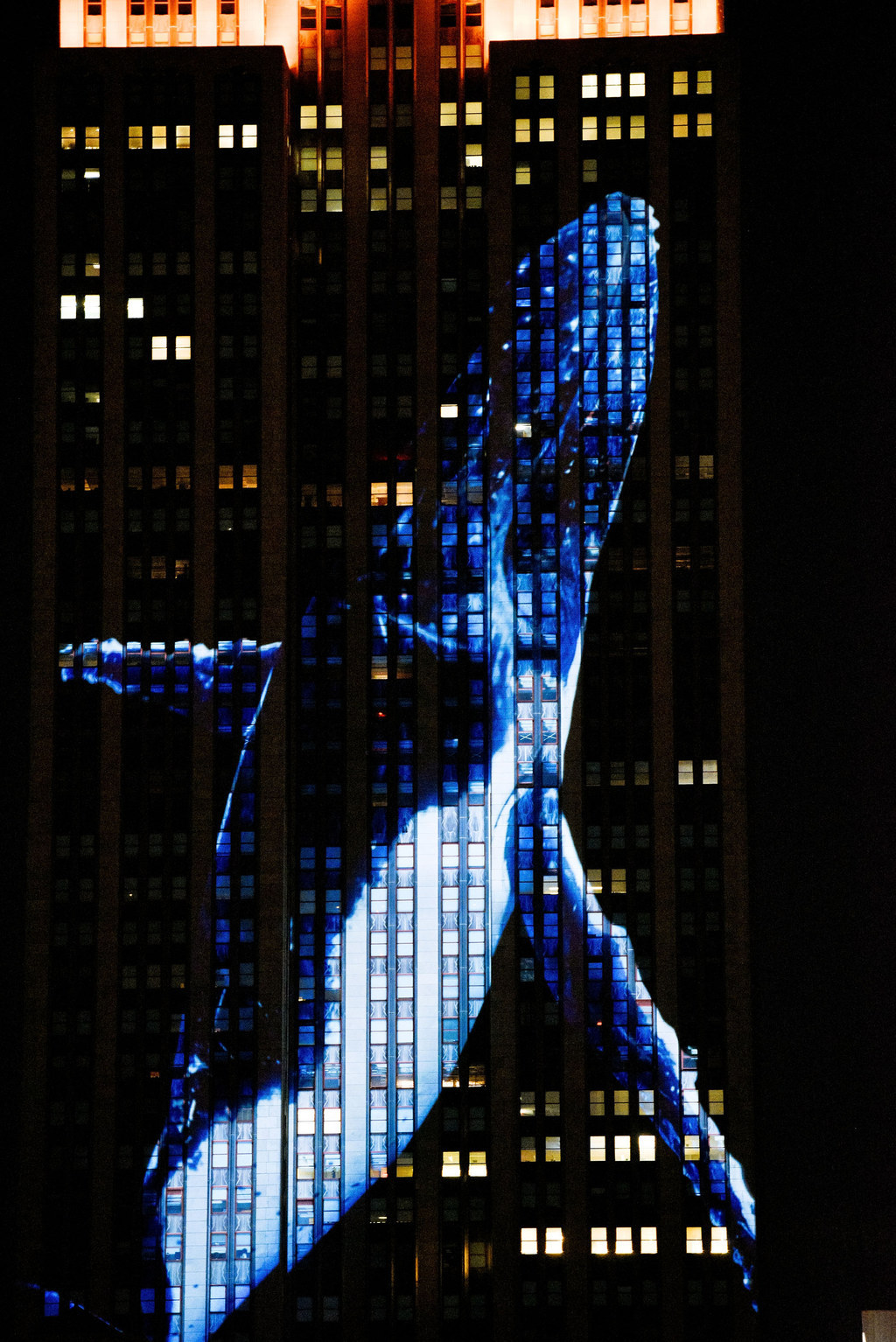 The Empire State Building Was Lit Up With Giant Photos Of Endangered Species