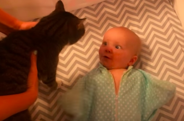 This Baby Can't Handle Herself Whenever She Sees The Family Cat