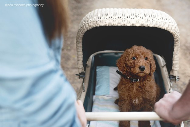 ...by doing a newborn baby shoot, but with their dog, Humphry, as the baby.