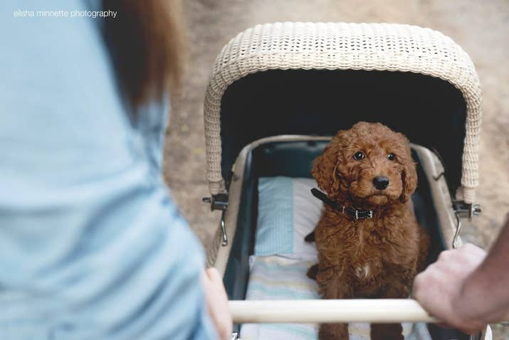 By doing a newborn baby shoot but with their dog humphry as the baby