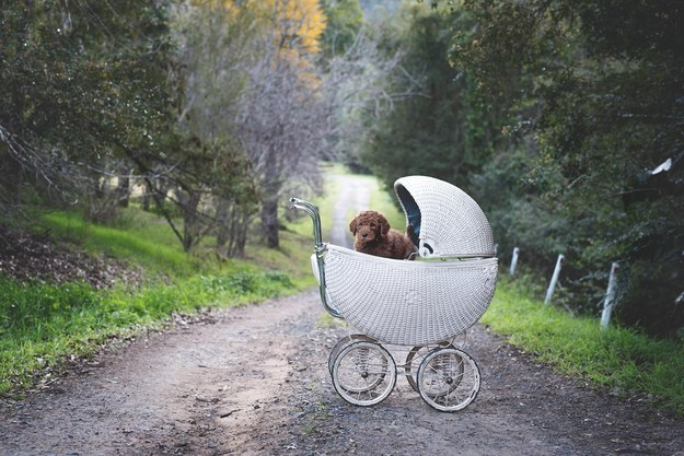 Photographer Elisha Minnette told BuzzFeed that she came up with the idea to do the puppy shoot with the couple, Matt and Abby, on a long drive home from picking up Humphry from a breeder.